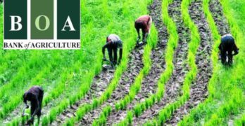 Bank of agriculture loans – What you should know